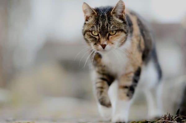 Что происходит после смерти кошки