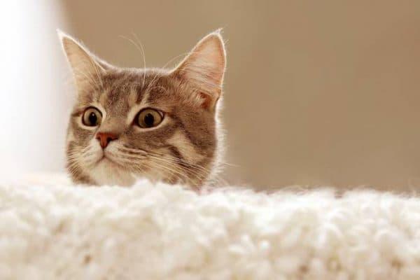 Есть ли душа у кошек читайте статью