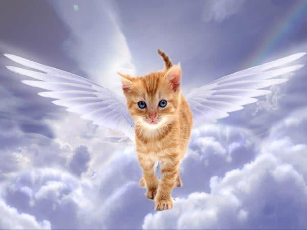 Есть ли душа у кошек