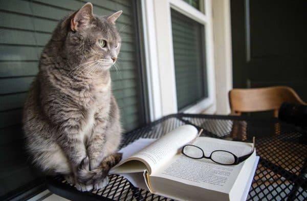Есть ли у кошек память читайте статью