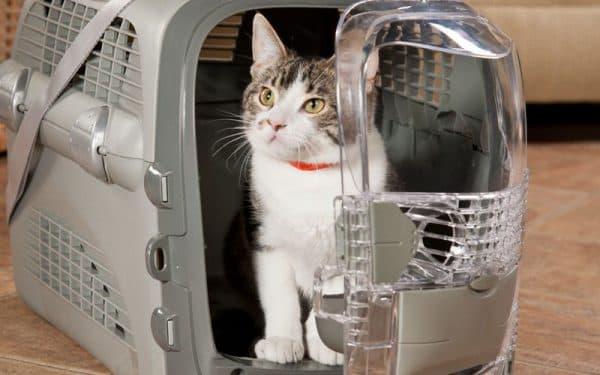 Как перевозить кошку в самолете