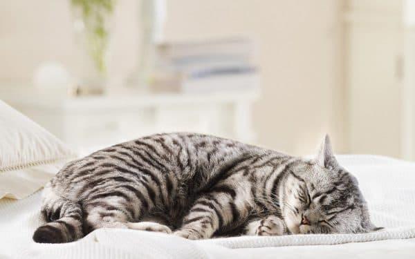 Как пережить смерть кошки читайте статью