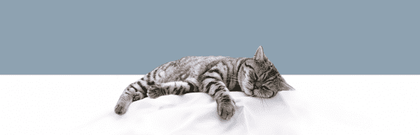 Как пережить смерть любимой кошки