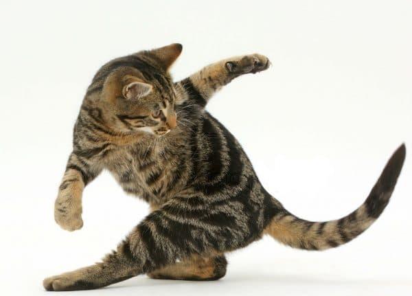 Кошка бегает за своим хвостом узнайте причину