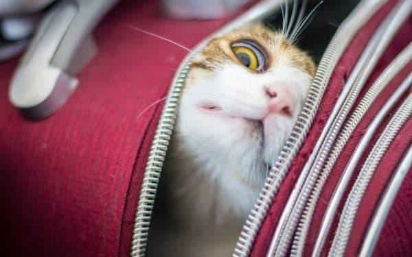 Кошка в поезде