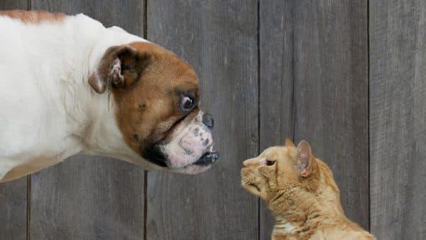 Кошки и собаки не дружат