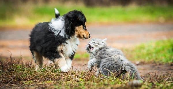 Кошки и собаки не дружат почему