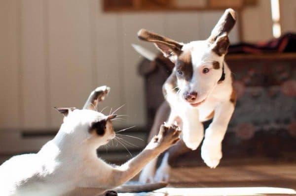 Кошки и собаки враждуют