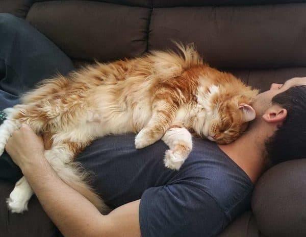 Кошки любят спать на людях узнайте причину