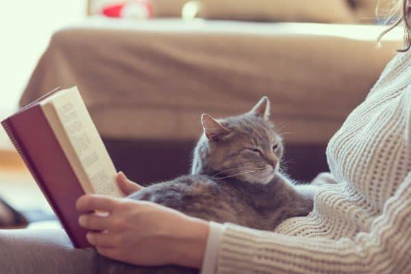 Люди которые любят кошек. Психология кошек читайте статью