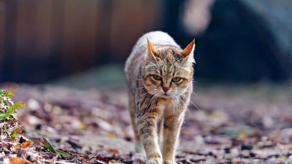 Народные приметы и суеверия о кошках читайте статью