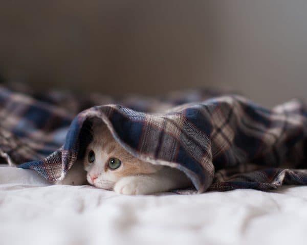 Почему кошка прячется под одеяло
