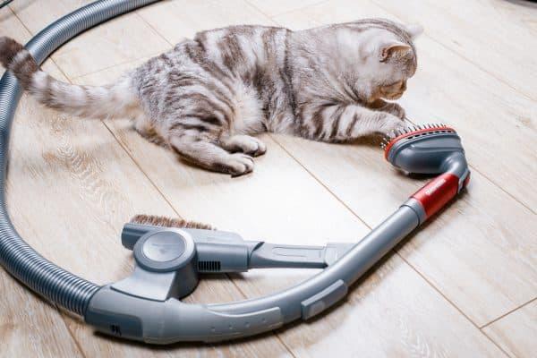 Почему кошки боятся пылесоса читайте статью