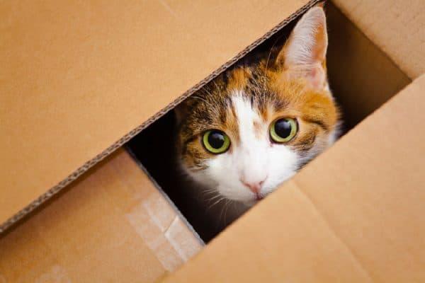 Почему кошки любят коробки и пакеты читайте статью