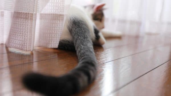 Почему кошки виляют хвостом читайте статью