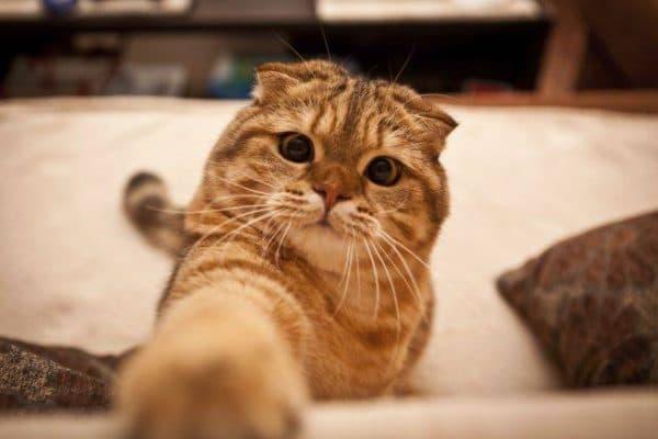 Способность кошек к обучению