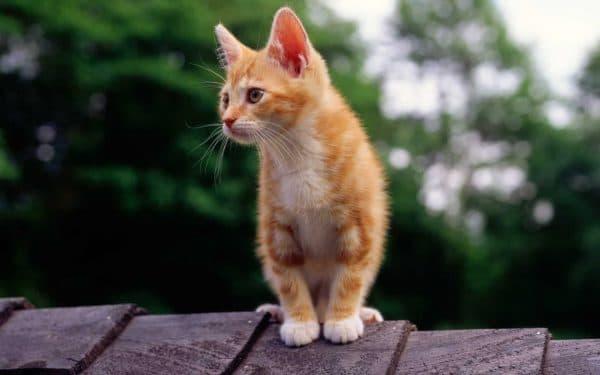 В доме не приживаются кошки почему