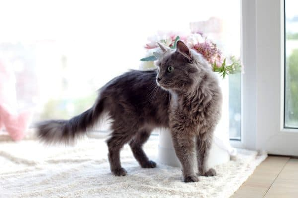 В доме не приживаются кошки узнайте причину