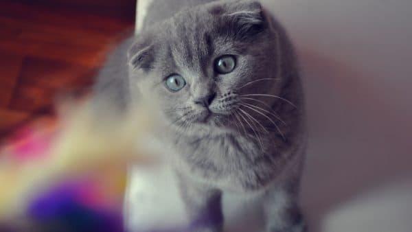 Меню для кастрированных котов