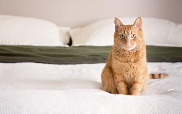Неприятный запах от кошки. Причины и методы устранения