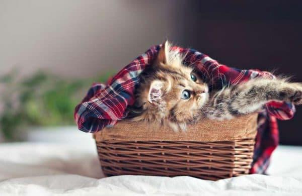 Правила кормления котёнка в 1.5 месяца
