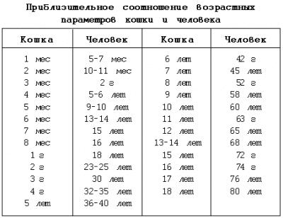 Соотношение возрастных параметров кошки и человека
