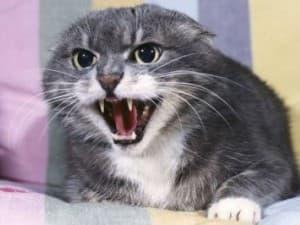 Кошка в маниакальной стадии