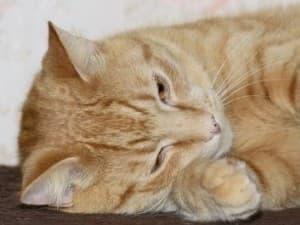 Котенок грустный у него понос