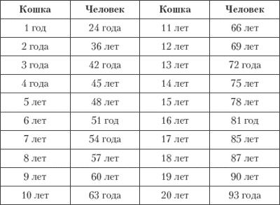 Сравним продолжительность кошачьей и человеческой жизни