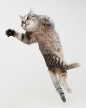 Как кошке удается в воздухе перевернуться на 180 градусов