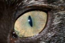 У котенка слезятся глаза. Что делать