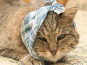 Отит у кошек лечение