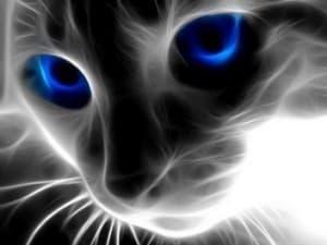 Удивительные способности кошек
