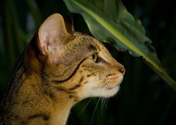 Ашера в дикой природе