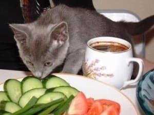 Корм для кошек домашнего приготовления