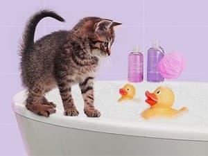 Советы для безопасного купания котенка