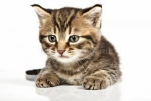 Приснилась кошка. Что это значит