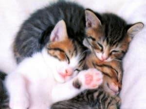 Цвет животного во сне