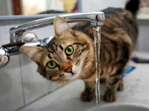 Котенок не пьет воду