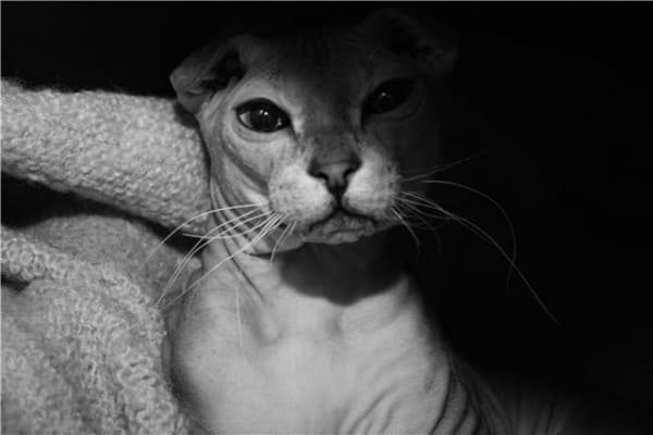 Необыкновенный левкой