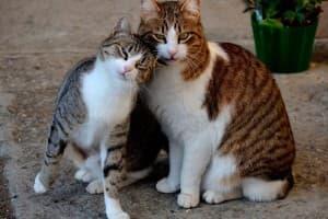Кто лучше кот или кошка