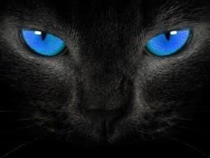 мистический взгляд кошки