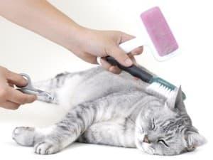 вычесывать кошек