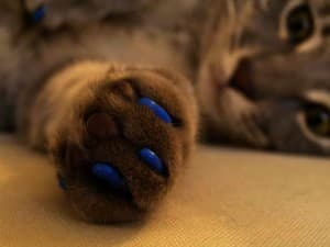антицарапки понадобятся кошке
