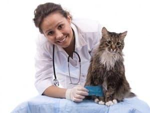Лечение микроспории у кошек