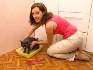 Уборка туалета для кошек