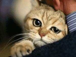 Как влияет антибиотик на кошку