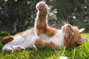 Авитаминоз и гиповитаминоз у кошек