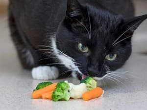 Не сбалансированное питание кошек