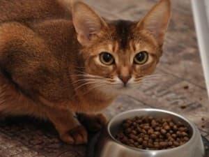 Гиповитаминоз у кошек